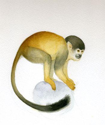 Monkey_sketch