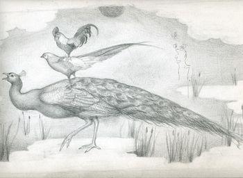 Fowl_drawing