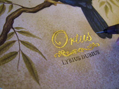 Ortus_process3