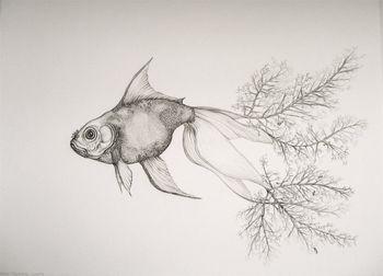 Tara_tucker_goldfish
